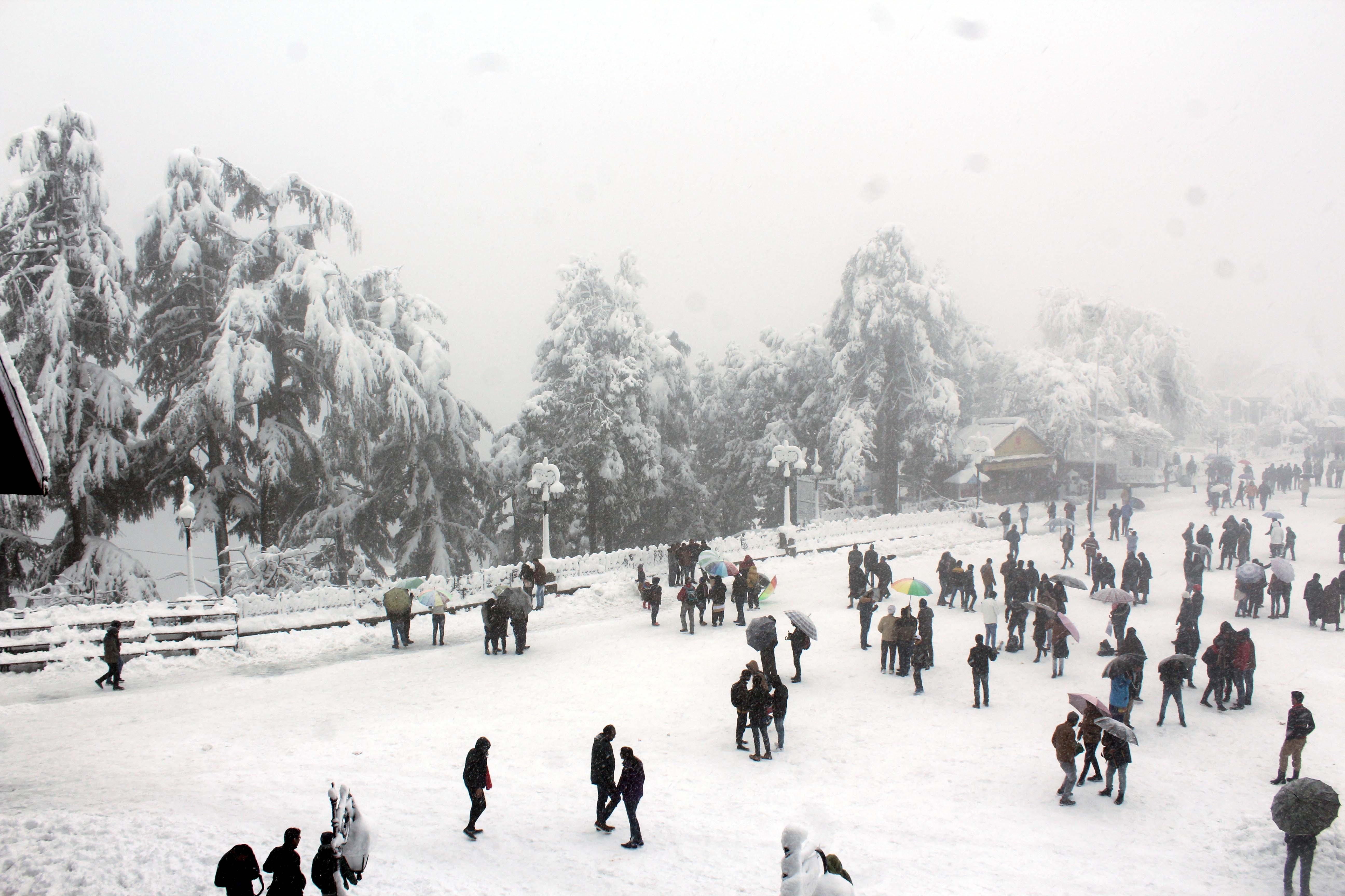 Shimla-Snow Live 1