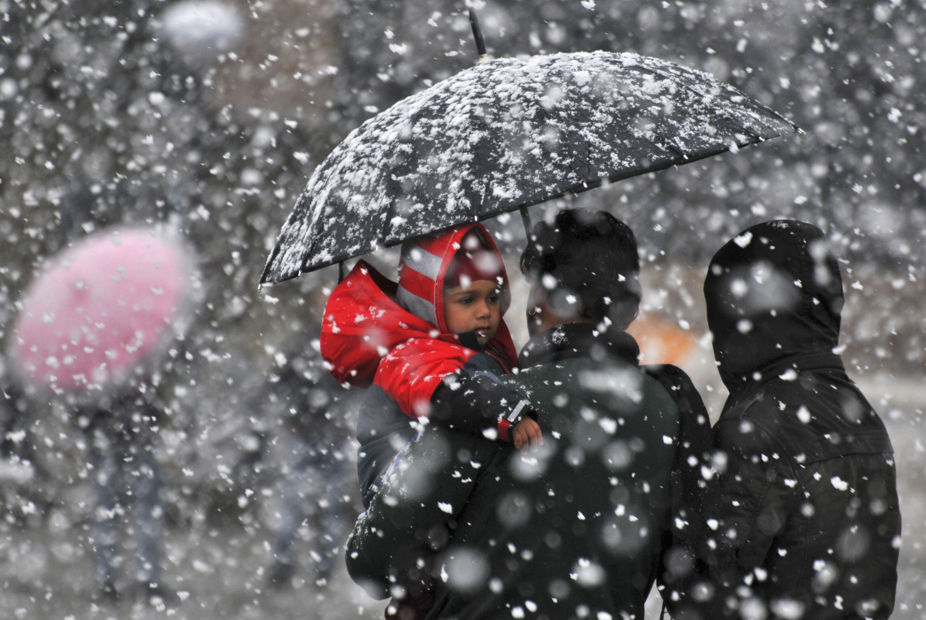 A family uses an umbrella to shelter themselves from heavy snowfall in the northern Indian hill town of Shimla March 1, 2014. REUTERS/Stringer (INDIA - Tags: ENVIRONMENT SOCIETY) - RTR3FV1J